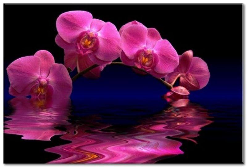 Obraz květiny K 23034