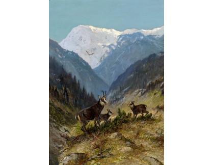 Krásné obrazy II-438 Moritz Müller - Kamzík ve vysokých horách