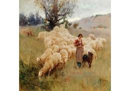 D-9773-1 Alfred Plauzeau - Stádo ovcí