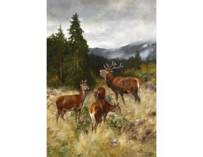 Krásné obrazy II-243 Josef Schmitzberger - Stádo jelenů
