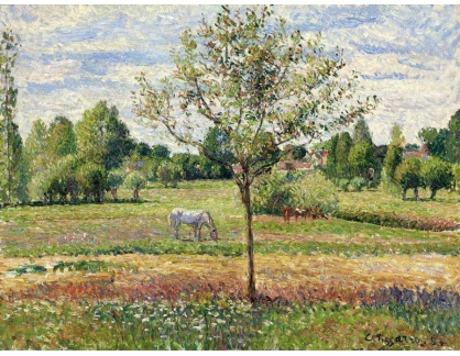 VCP-421 Camille Pissarro - Šedý kůň v Eragny