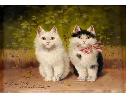 VN-227 Sophie Sperlich - Dvě koťata