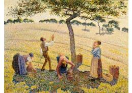 D-8112 Camille Pissarro - Sběr jablek