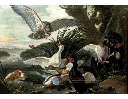 VH146 David de Coninck - Lov na kachny