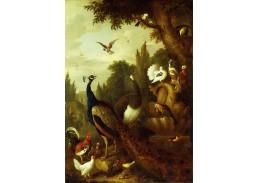 Krásné obrazy II-9 Jakob Bogdani - Páv, pávice, papoušci, kanárek a jiní ptáci v parku