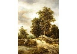 D-6129 Jacob van Ruisdael - Cesta