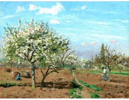 VCP-362 Camille Pissarro - Ovocný sad
