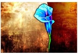 Obraz květiny 4481