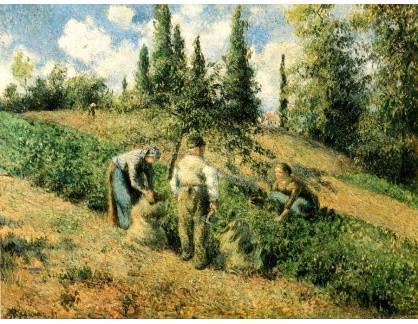 VCP-389 Camille Pissarro - Sklizeň jablek v Pontoise