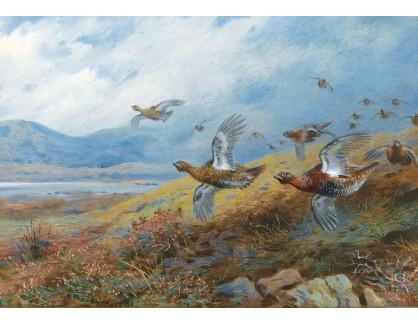 Slavné obrazy XVI-256 Archibald Thorburn - Tetřevi v letu