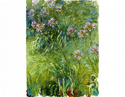 SO IV-1 Claude Monet - Agapanthus