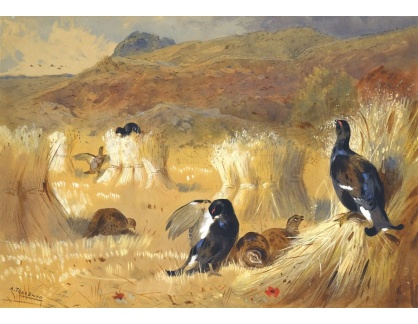 Slavné obrazy XVI-262 Archibald Thorburn - Černí kohouti na poli