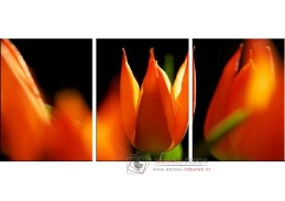 Obraz - Triptych 3D-1263