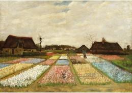 DDSO-4294 Vincent van Gogh - Květinové záhony v Holandsku