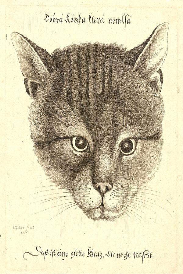 Obraz Dobrá kočka která nemlsá VVH 88
