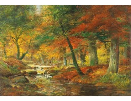 DDSO-4800 Alois Arnegger - Podzimní krajina lesa