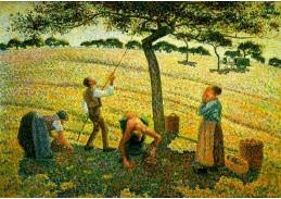 VCP-103 Camille Pissarro - Sběr jablek v Eragny