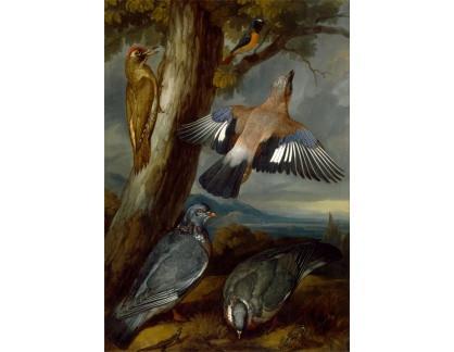 Slavné obrazy XVII-82 Francis Barlow - Strakapoud, holubi a rehek zahradní