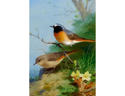 Slavné obrazy VII-35 Archibald Thorburn - Párek ptáků