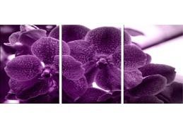 Obraz - Triptych 3D-6118