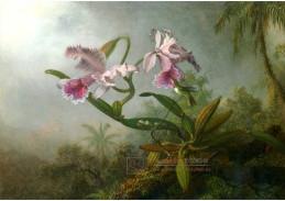VU101 Martin Johnson Heade - Růžové orchideje s kolibříkem na větvičce