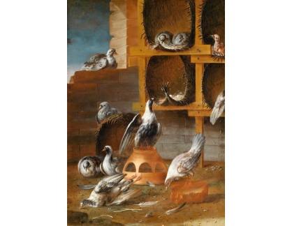 Krásné obrazy II-462 Neznámý autor - Holubi