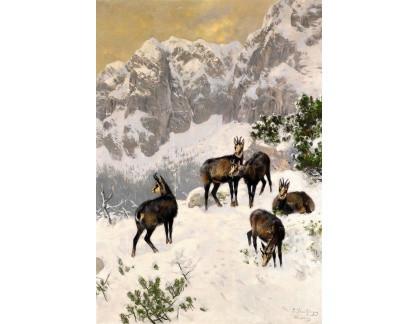 Krásné obrazy II-241 Josef Schmitzberger - Kamzíci v zimě