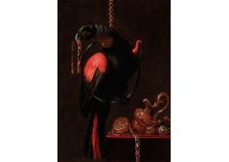 DDSO-1895 Andrea Scacciati - Papoušek s náramkem