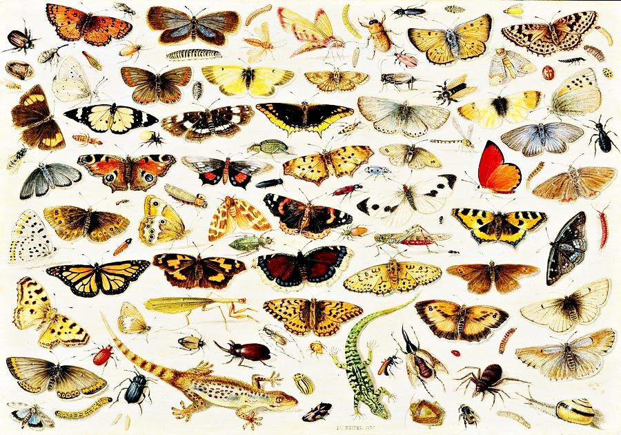 BRG-06 Ambrosius Brueghel - Motýli