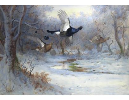 Slavné obrazy XVI-254 Archibald Thorburn - Tetřev za letu v zimě