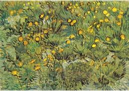 A-13 Vincent van Gogh - Pole se žlutými květinami