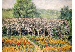 A-1046 Claude Monet - Plamínky v Giverny