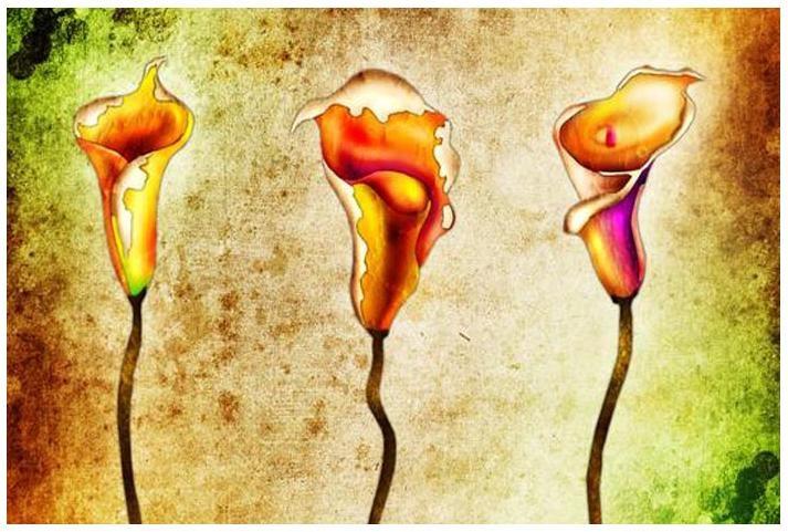 Obraz květiny 4503