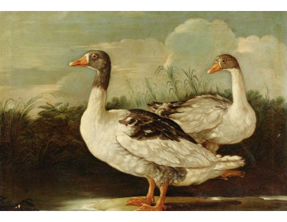 Krásné obrazy IV-496 Neznámý autor - Dvě husy