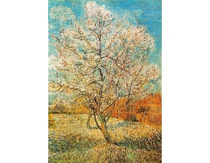 R2-761 Vincent van Gogh - Kvetoucí broskvoně