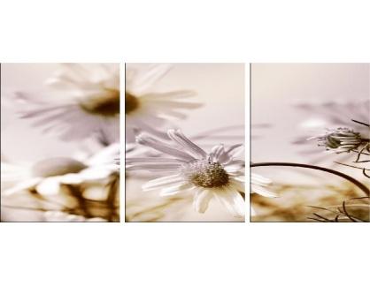 Obraz - Triptych 3D-188