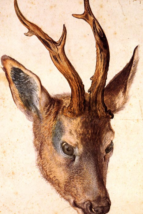 R12-81 Albrecht Dürer - Jelení hlava