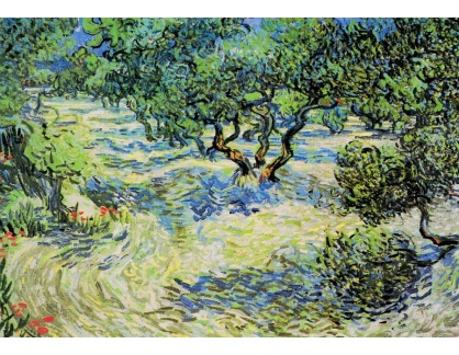 R2-996 Vincent van Gogh - Olivový háj