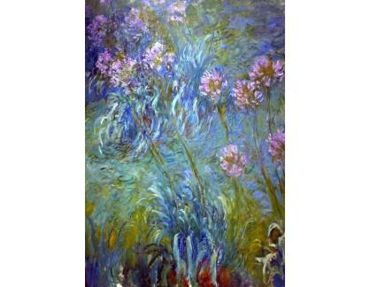 VCM 73 Claude Monet - Agapanthus