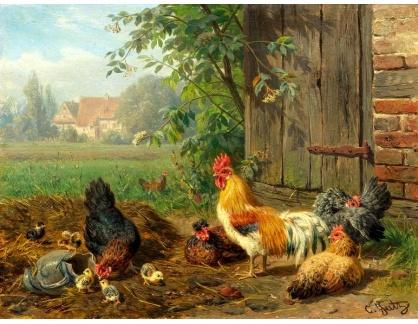 DDSO-1354 Carl Jutz - Kohout se slepicemi a kuřaty