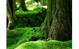 Příroda I