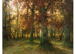 DDSO-2236 Adolf Kaufmann - Podzimní les