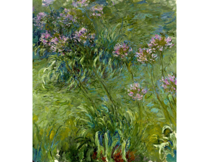 VCM 129 Claude Monet - Agapanthus